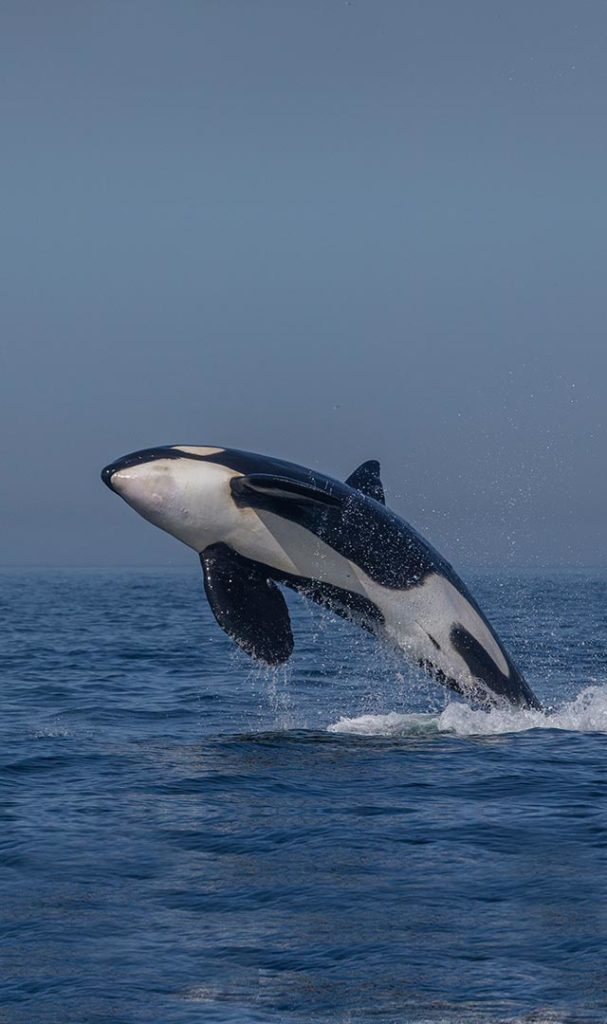 avistamiento de cetaceos en tarifa